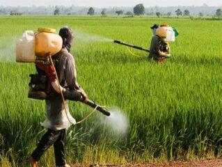 مبارزه با آفات در بیش از ۱۵ هزار هکتار مزارع شهرستان ارزوئیه