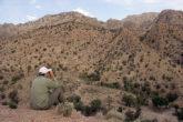 زیست ۷ گونه گربه سان در استان/ ۲۰ منطقه حفاظت شده در استان کرمان وجود دارد
